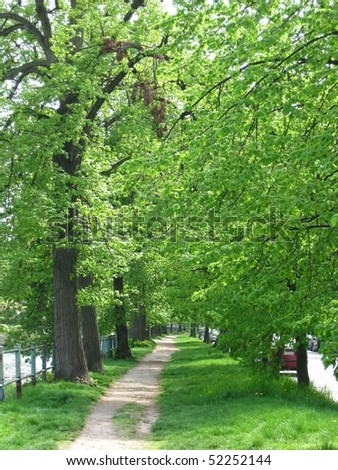 path among trees in Wroclaw, Poland