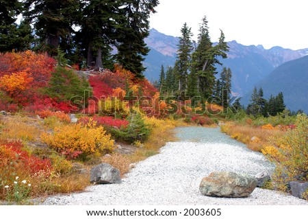 Path at the Park - stock photo