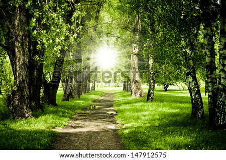 path between green trees - stock photo
