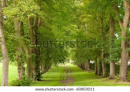 Path between the green trees