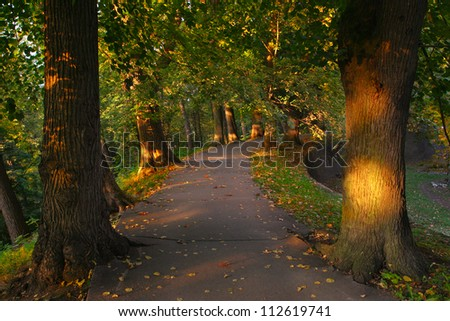 path between the trees in the forest - stock photo