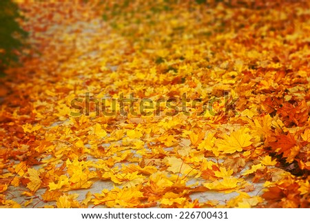 Path covered with yellow autumn leaves - stock photo