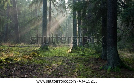 Path crossing autumnal misty forest in morning - stock photo