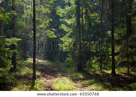 Path crossing old forest illuminated by morning sun against dark background - stock photo