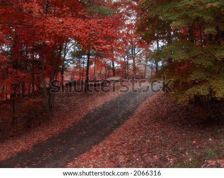 path cutting through colorful autumn landscape
