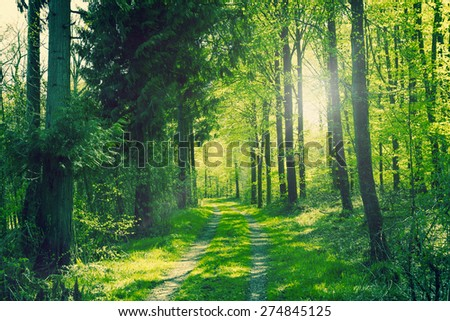 Path going through a green forest in the spring - stock photo