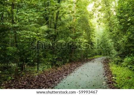 Path heading to deep tropical rainforest. Selangor state, Malaysia, Asia. - stock photo