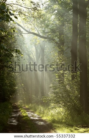 Path in a dark forest with the sun rays passing through the trees. - stock photo