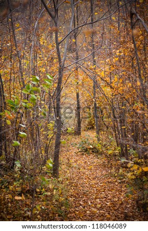 Path in a forest in the middle of autumn - stock photo