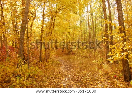 Path in a golden forest