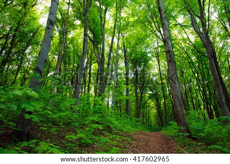 Path in a green deciduous forest, nature background - stock photo