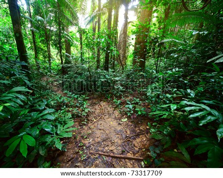 Path in a green wild tropical forest - stock photo