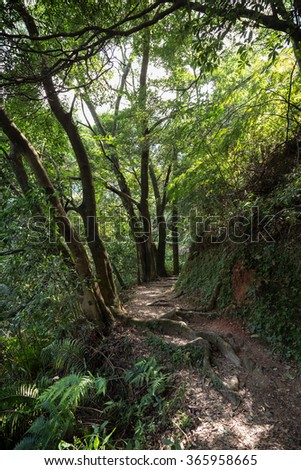 Path in a lush and verdant forest at the New Territories in Hong Kong, China.