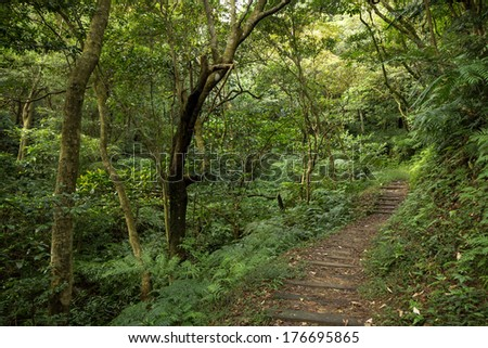 Path in a lush and verdant forest full of trees, ferns and other plants