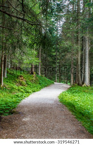 path in a lush forest in summer - stock photo