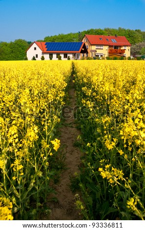 Path in a rapeseed field towards modern farm with solar panel on the roof - stock photo