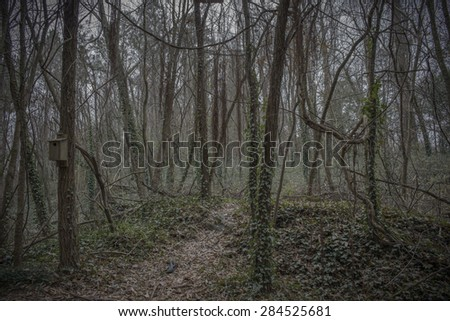 Path in a spooky forest with vines and ivy. - stock photo