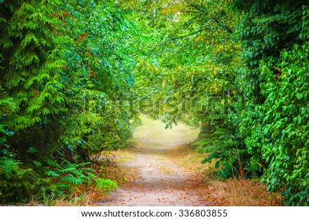 Path in a summer park - stock photo