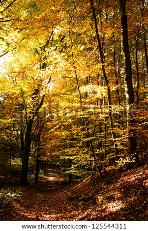 path in autumn - stock photo