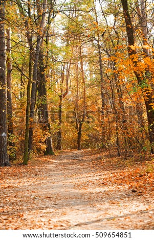 Hiking Path Beautiful Autumn Park Stock Images, Royalty-Free ...