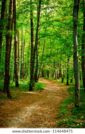 Path in beautiful beech forest near Rzeszow, Poland - stock photo