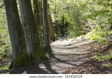 Path in beech forest in spring - stock photo