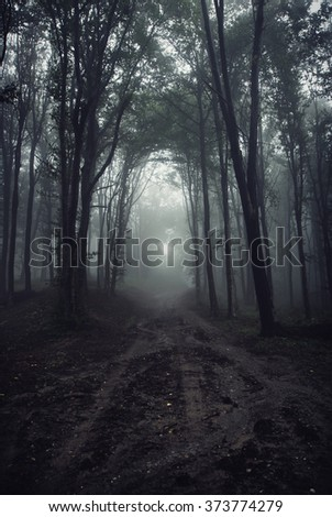 path in dark misty forest - stock photo