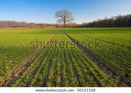 Path in field leading to a tree in spring