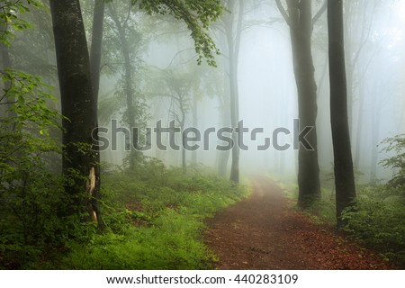 Path in foggy forest - stock photo
