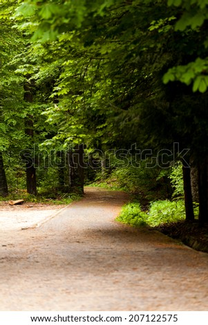 Path in forest - stock photo
