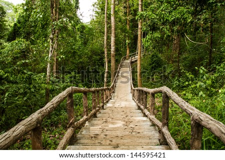 Path in forest chiangmai Thailand - stock photo