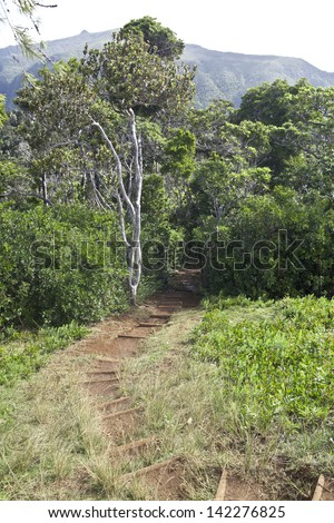 Path in forest of Black River Gorges national park on Mauritius island - stock photo