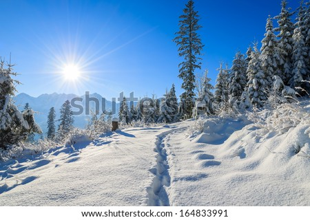 Path in fresh snow to Rusinowa Polana in winter landscape of Tatry Mountains on sunny day, Poland - stock photo