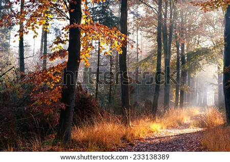 path in misty autumn forest in morning - stock photo