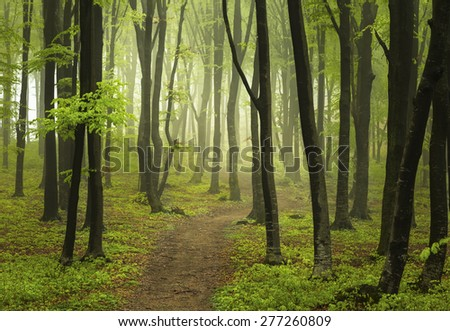 Path in misty forest - stock photo