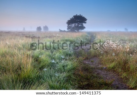 path in misty summer morning and pine tree - stock photo