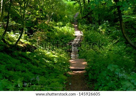 Path in Permer forest - stock photo