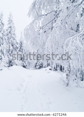 Path in snow between snowy trees - stock photo