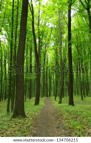 Path in spring green forest - stock photo