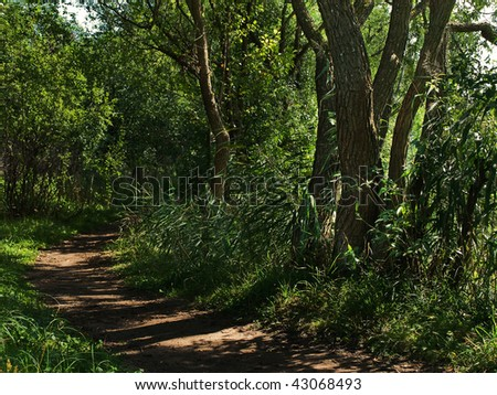 path in summer green forest with sun rays