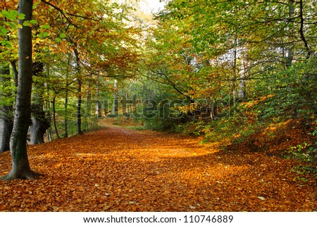 Path in the autumn park. Autumn Landscape. Park in Autumn. Forest  in Autumn. Dry leaves in the foreground. - stock photo