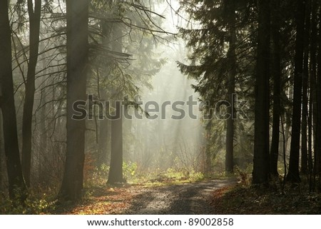 Path in the coniferous forest on a foggy November morning. - stock photo
