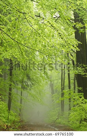 Path in the deciduous forest on a foggy spring morning. - stock photo