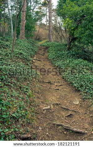 Path in the  early spring forest at sunset time - stock photo
