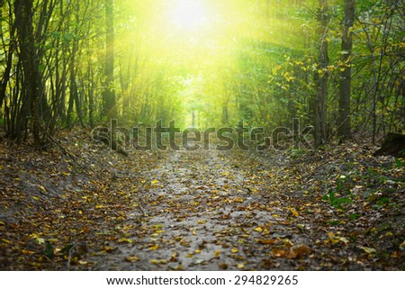 Path in the fall forest. Natural autumn background - stock photo