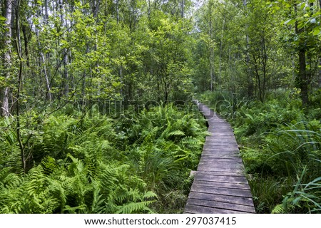 Path in the forest in Polesie National Park, Poland. - stock photo