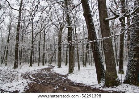 Path in the forest in the Winter