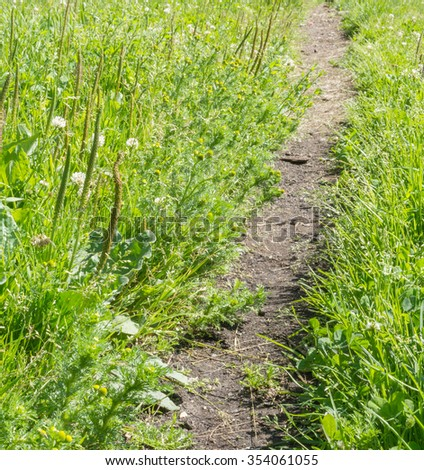 path in the grass - stock photo