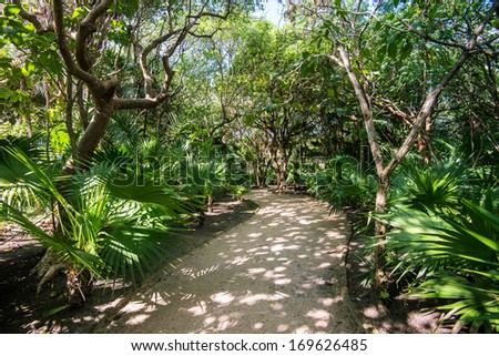 Path in the jungle with sun and shade - stock photo