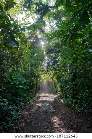 Path in the jungle with sunlight through the foliage, natural scene, Bastimentos island ,Caribbean, Panama, Bocas del Toro - stock photo